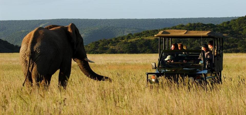 Shamwari Bayethe Safari