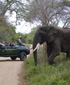 South Africa Safari | Complete Packages | Safari Guide Africa