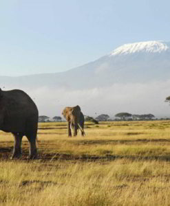 Amboseli Safari Lodges