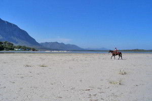 hermanus-horse-on-beach