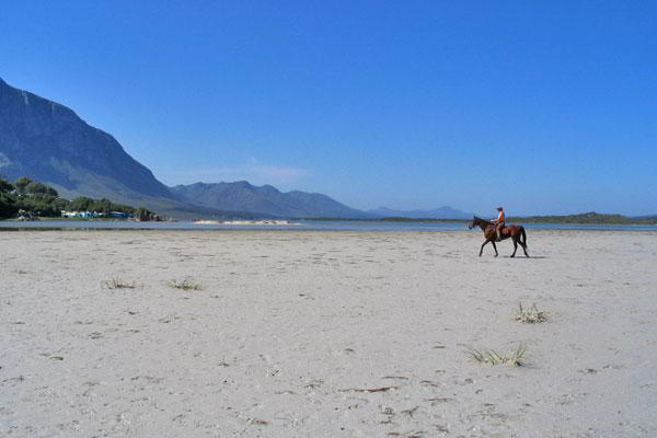 Hermanus horse on beach