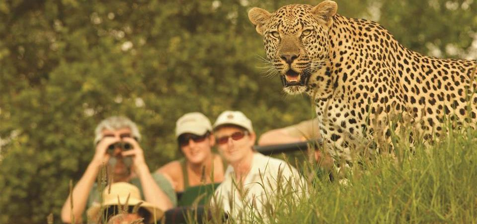 londolozi-varty-game-drive