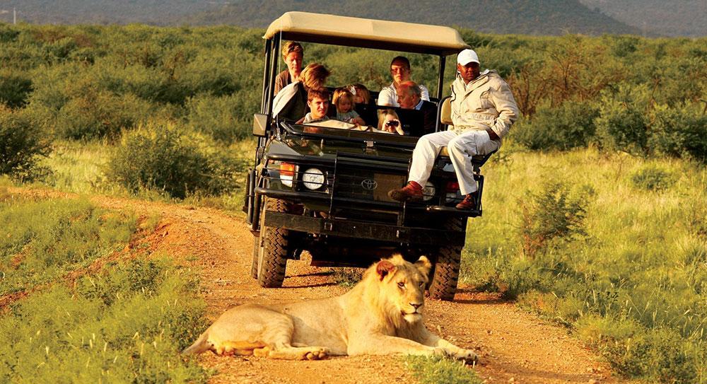 Madikwe Hills - Safari