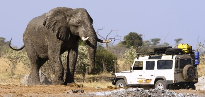 Chobe Elephant Botswana