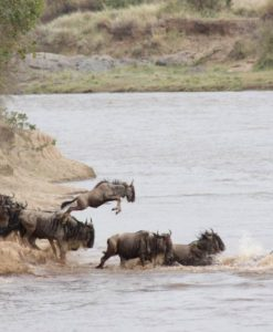 Kenya Safari Tours & Packages