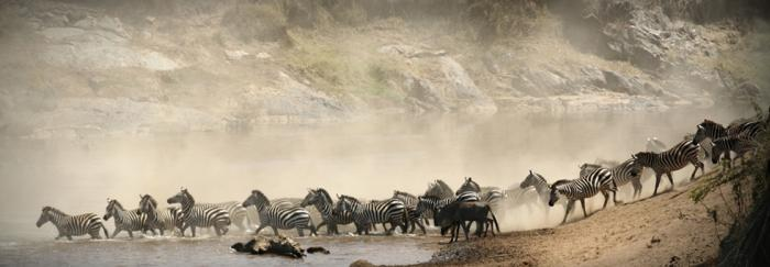 maasai mara river crossing