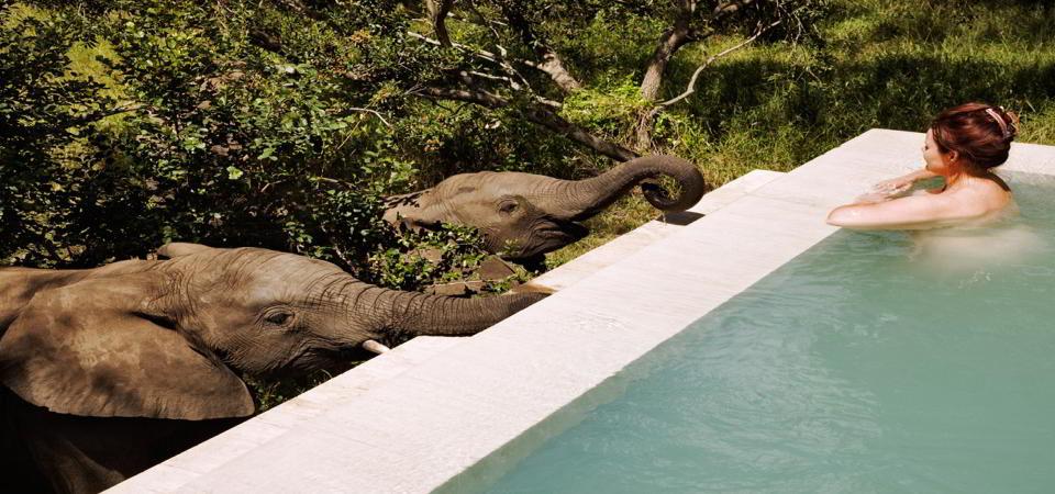 malewane pool