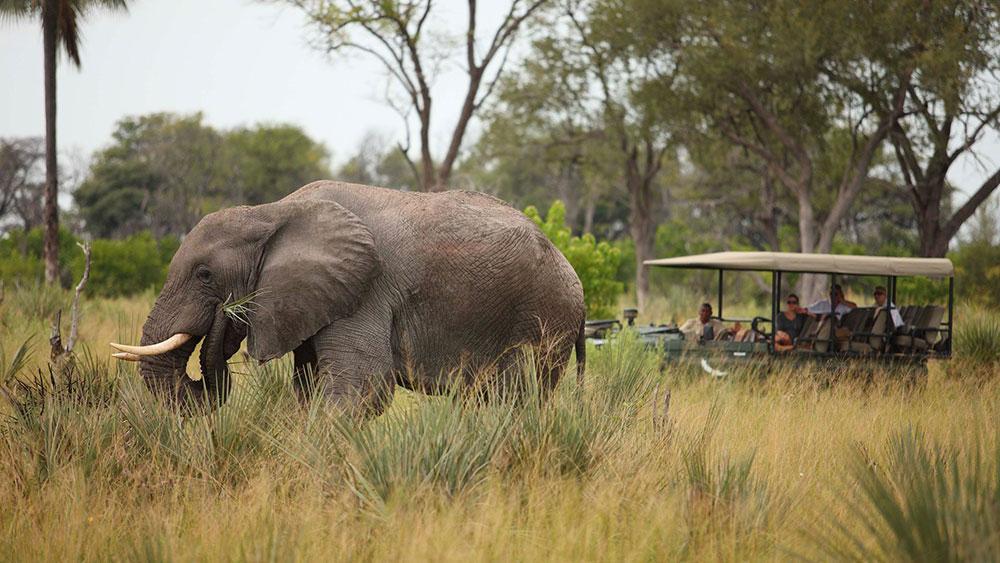 Nxabega Okavango Elephant Safari