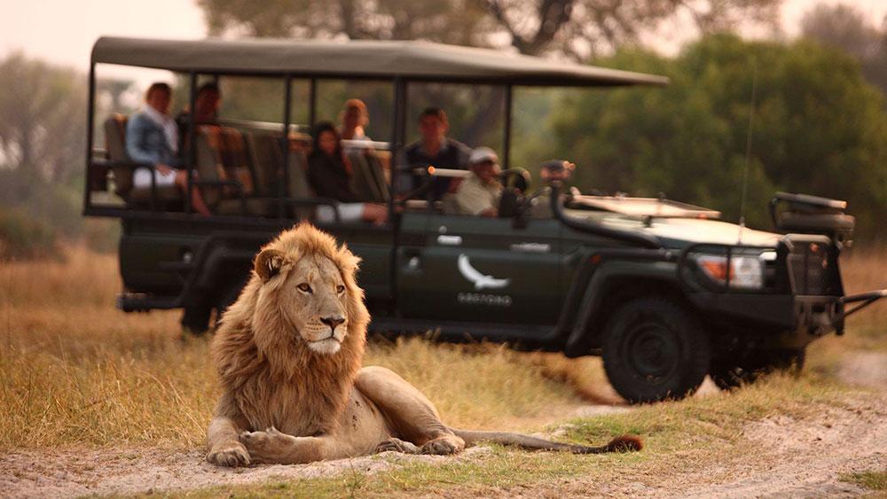 Nxabega Okavango Lion Safari