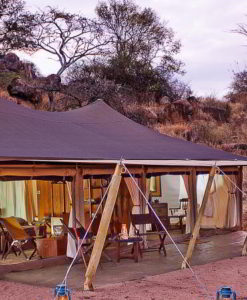 serengeti pioneer camp room