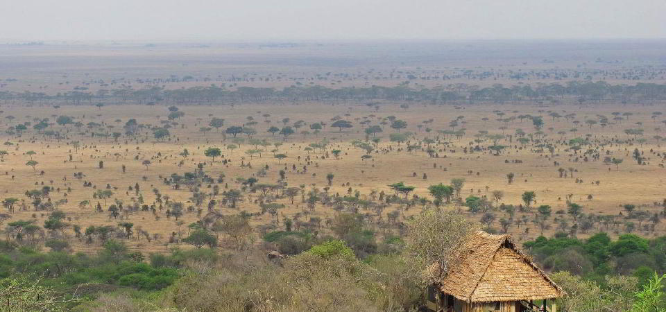 serengeti pioneer camp view