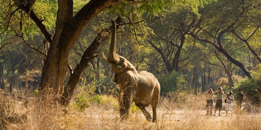 south luangwa elephant