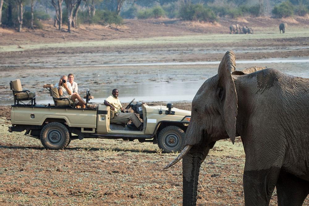 Tena Tena Elephant