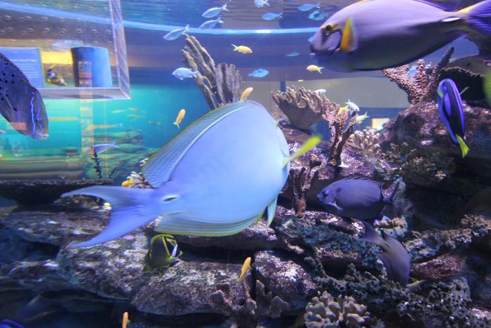 two-oceans-aquarium-1