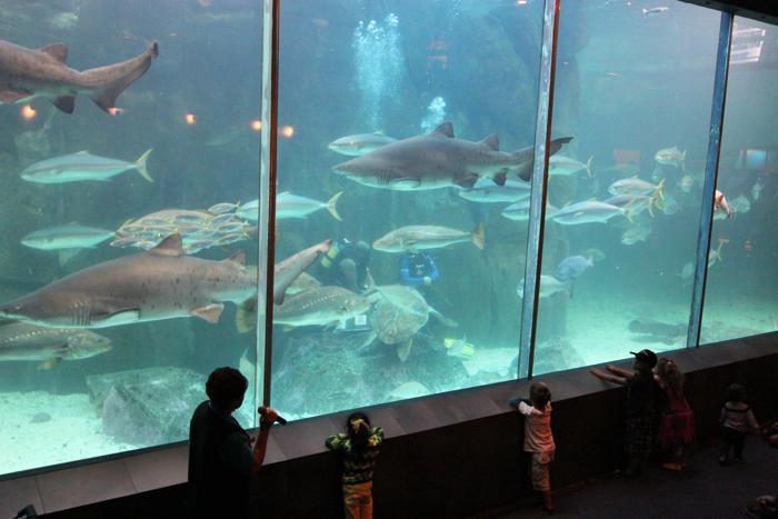two-oceans-aquarium-12