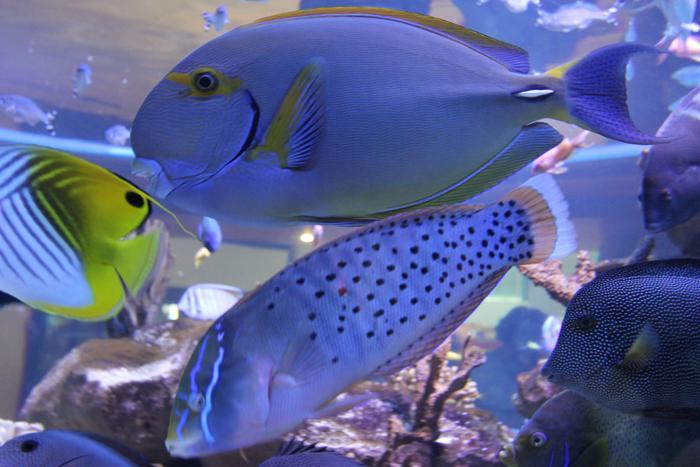 two-oceans-aquarium-3