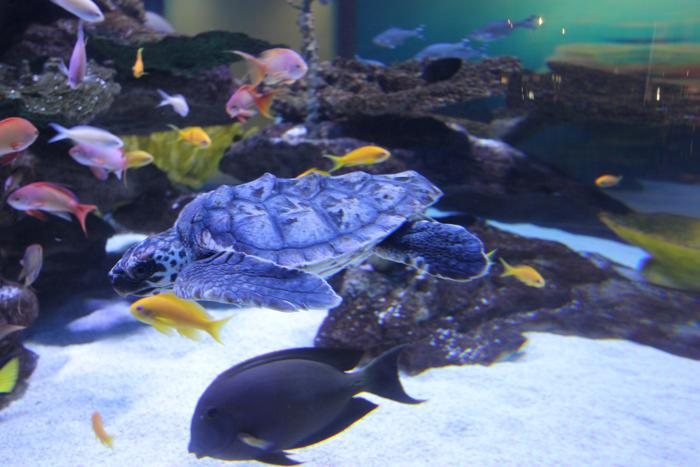 two-oceans-aquarium-4