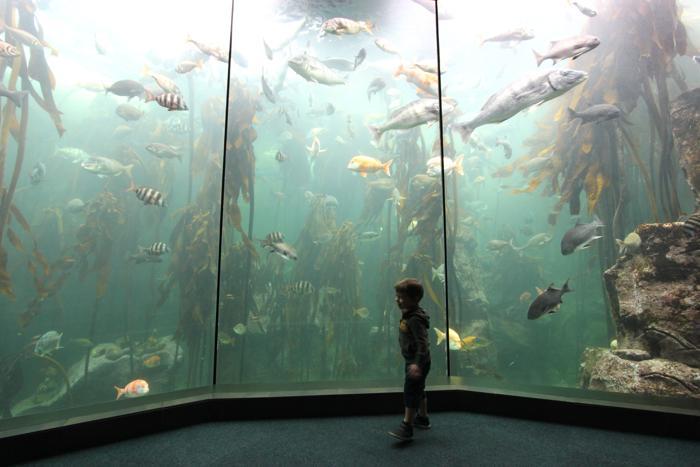 two-oceans-aquarium-8