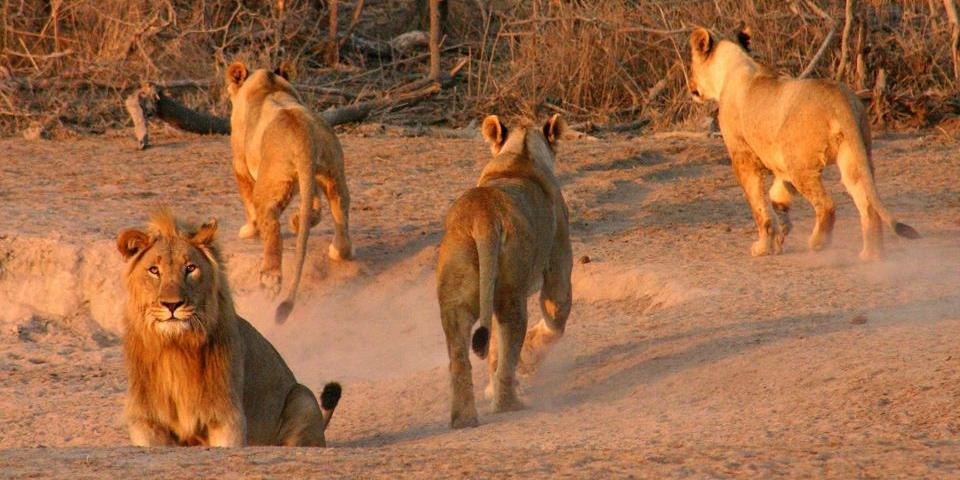 Jamala Madikwe Lions