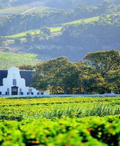 Cape Winelands Tours