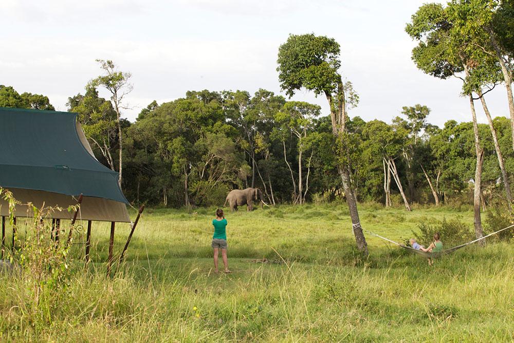 Elephant Pepper Camp Safari View