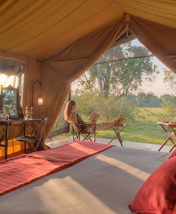 Elephant Pepper Camp Tent