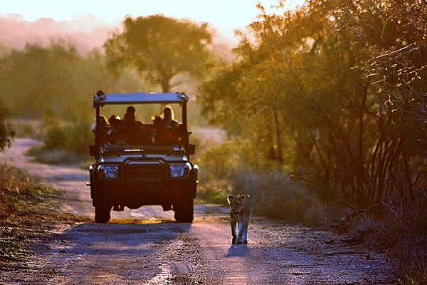 Imbali safari experience