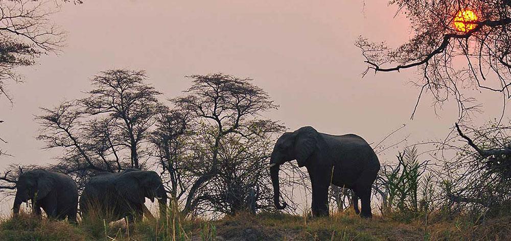Old Drift Lodge Safari