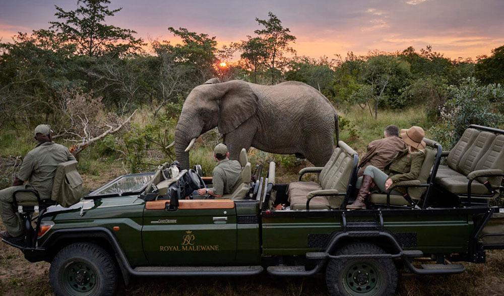 Royal Malawane Safari