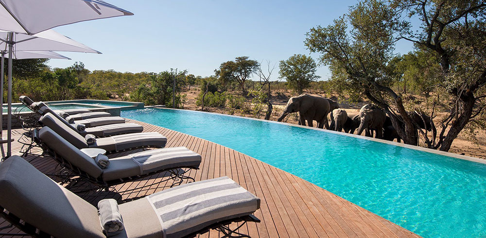 Ngala Safari Lodge Swimming Pool