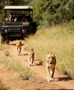 Camp Jabulani - Game Drive