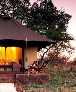 white elephant safari lodge