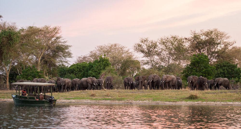 mvuu camp boat safari