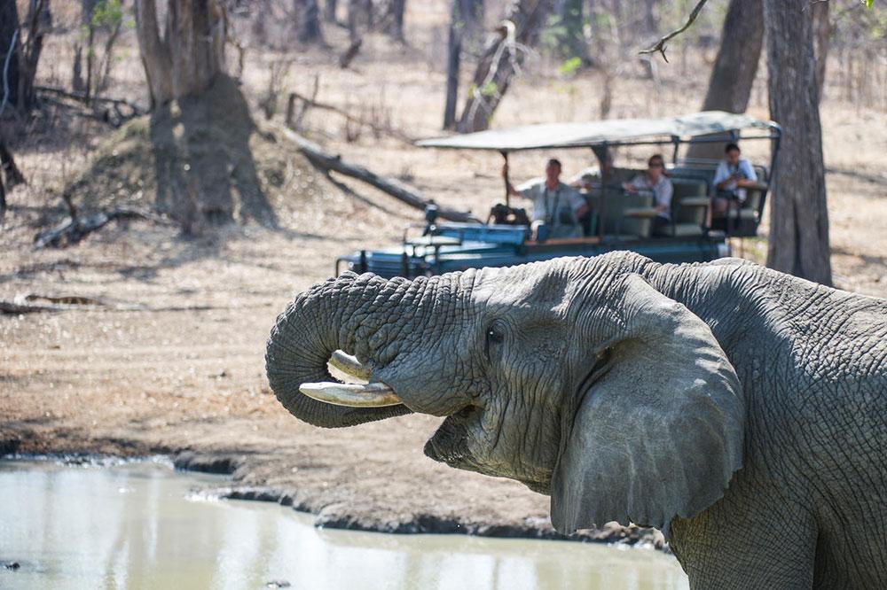 Mvuu Camp Safari